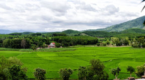 Beautiful green rice fields under the cloudy sky in Vietnam Royalty Free Stock Photography
