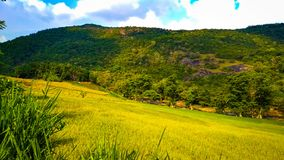 Green mountains with faddy fields royalty free stock image