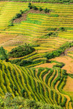 Beautiful green rice terrace rows Stock Photos