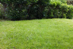 Beautiful green shrub and grass Stock Images