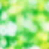 Beautiful green spring background Stock Photography