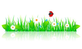 Beautiful green spring illustration. Vector illustration of beautiful green spring grass with leaves, daisies, and ladybug Royalty Free Stock Images