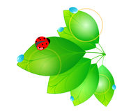 Beautiful green spring leaves Stock Photo