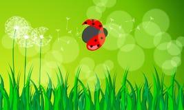 Beautiful green spring meadow Stock Photos