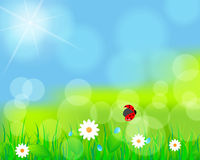 Beautiful green spring meadow. Vector illustration of beautiful green spring meadow with daisies and ladybug Royalty Free Stock Image