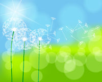 Beautiful green spring meadow. Vector illustration of beautiful green spring meadow with dandelions Royalty Free Stock Image