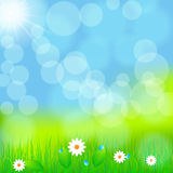 Beautiful green spring meadow. Vector illustration of beautiful green spring meadow with daisies Royalty Free Stock Image