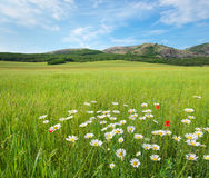 Beautiful green spring meadow landscape. Stock Image