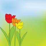 Beautiful green stripe spring Stock Photo