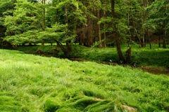 Beautiful green summer meadows royalty free stock image