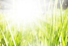 Beautiful green summer sunny background Royalty Free Stock Photography