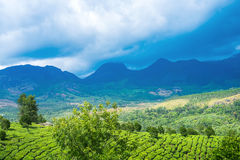 Beautiful green tea plantations with mountains, clouds, trees, M Stock Photos