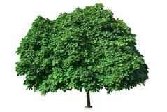 Beautiful green tree Stock Photography