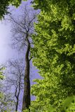 Beautiful green tree. Near a forest in the mountains Royalty Free Stock Photo