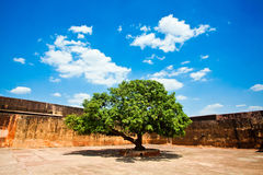 Beautiful green tree. Blue sky and white clouds Stock Photography