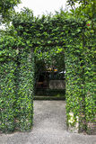 Beautiful green tree door. Royalty Free Stock Images
