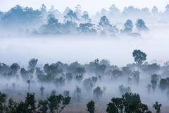 Beautiful green tree with fog in the morning,Dramatic shine silh Stock Images