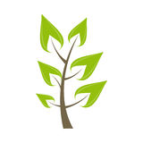 Beautiful Green Tree Icon on a White Background Royalty Free Stock Photo