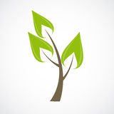 Beautiful Green Tree Icon on a White Background Royalty Free Stock Images