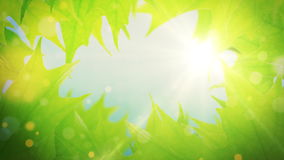 Beautiful green tree leaves reveals the light of the sun. Summer background, beautiful green tree leaves reveals the soft light of the sun stock video