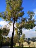 Beautiful green tree Stock Photography