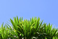 Beautiful green tree on a white background on high definition Stock Image