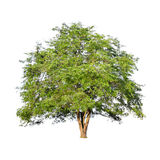 Beautiful green tree on a white background on high definition Stock Images