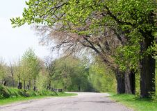 Beautiful green trees Royalty Free Stock Photo