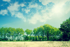 Beautiful green trees on a dry field Royalty Free Stock Photos