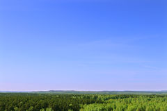 Beautiful green trees of forest and clear blue sky Royalty Free Stock Photography