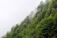 Beautiful green trees on a hill in the fog in the mountains of Sochi stock photo