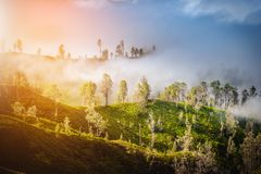 Beautiful green trees on mountain with fog. In the morning Royalty Free Stock Images
