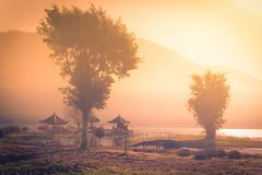Beautiful green trees with pavilion among fog at sunrise in morn. Ing Stock Photo