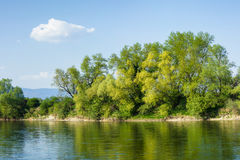 Beautiful green trees on the river shore reflecting in the water. With blue sky and white clouds Royalty Free Stock Photos