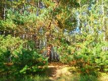 Beautiful green trees royalty free stock image