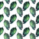 Beautiful green tropical cute lovely wonderful hawaii floral herbal summer pattern of a palms watercolor hand illustration. Perfect for textile, wallpapers Stock Image