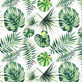 Beautiful green tropical cute lovely wonderful hawaii floral herbal summer pattern of a palms watercolor Stock Images