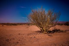A beautiful green trunk tree in the desert. royalty free stock photos