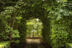 Beautiful green tunel with light in background and rocks alley stock images