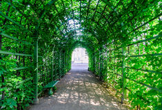 Beautiful green tunnel from plants. Green tunnel. Beautiful green tunnel from plants. Bright Sunny day, shady pass, a canopy of plants. Tunnel of green grass stock photo
