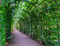 Beautiful green tunnel from plants. Green tunnel. Beautiful green tunnel from plants. Bright Sunny day, shady pass, a canopy of plants. Tunnel of green grass royalty free stock photos