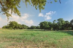 Beautiful green urban park grassy lawn in Irving, Texas, USA. Beautiful green urban park in Irving, Texas, USA. Well-groomed grass lawn, tall trees lush Royalty Free Stock Photography