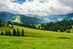 Beautiful green valley with coniferous forest Royalty Free Stock Photo