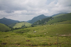 Beautiful green valley countryside with farm animals background in iraty / irati mountains Royalty Free Stock Images