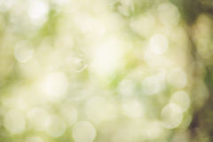 Beautiful green vanilla bokeh background. Royalty Free Stock Photos