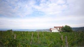 Beautiful green vineyard Royalty Free Stock Photos