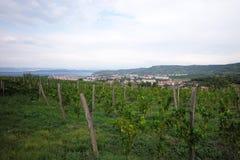 Beautiful green vineyard Stock Photo