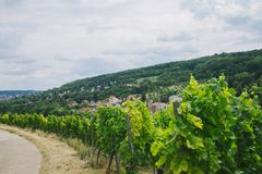 Beautiful green vineyard road and hill. In Wurzburg Germany royalty free stock photos