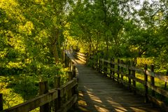 Free Beautiful Green Willow Trees Forest With Boardwalk At Benavente, Portugal Stock Photos - 143298993