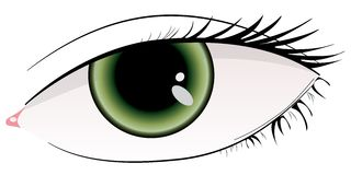 Beautiful green woman eye Stock Photos